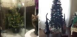 Enlace a Personas que son expertas protegiendo el árbol de navidad de sus mascotas