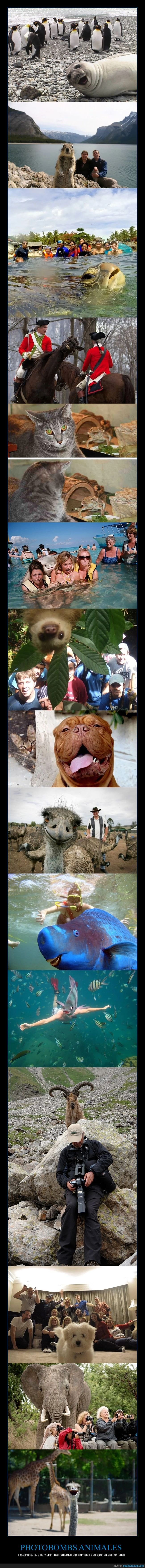 animales,fotos,photobombs