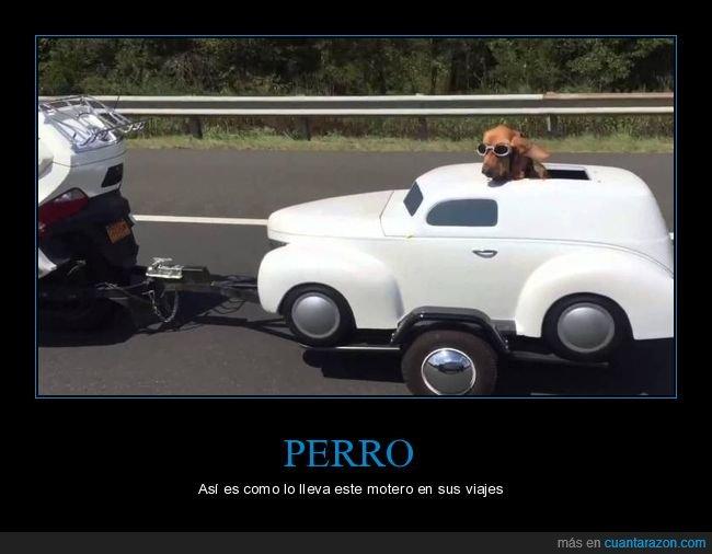 moto,perro,viaje,wtf