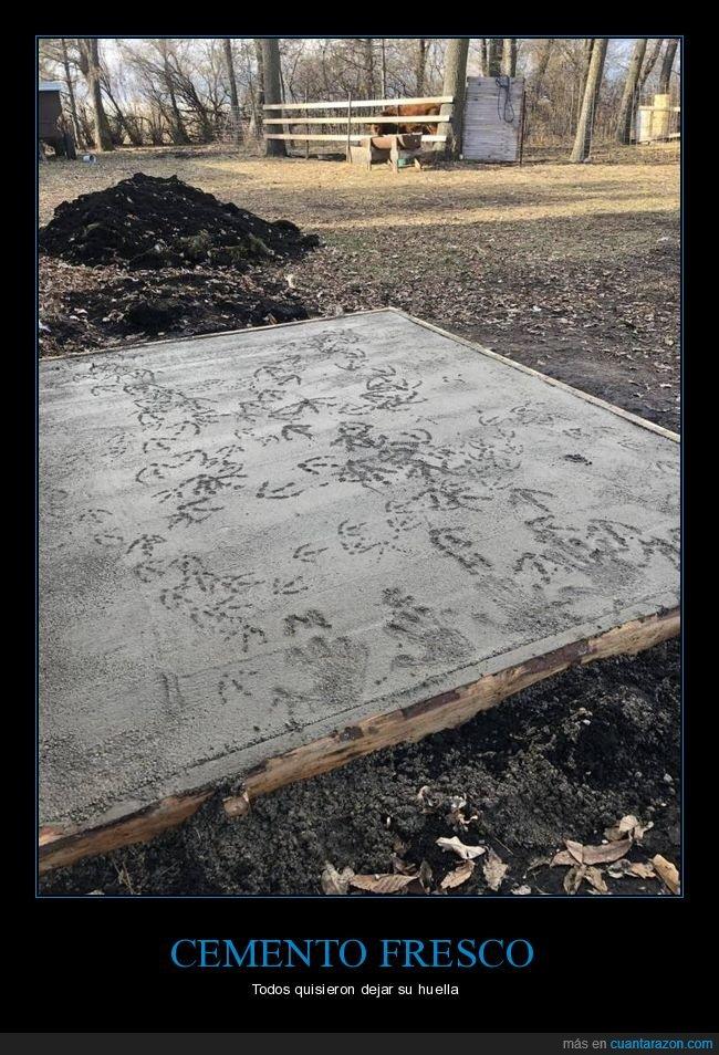 cemento,fails,manos,pisadas