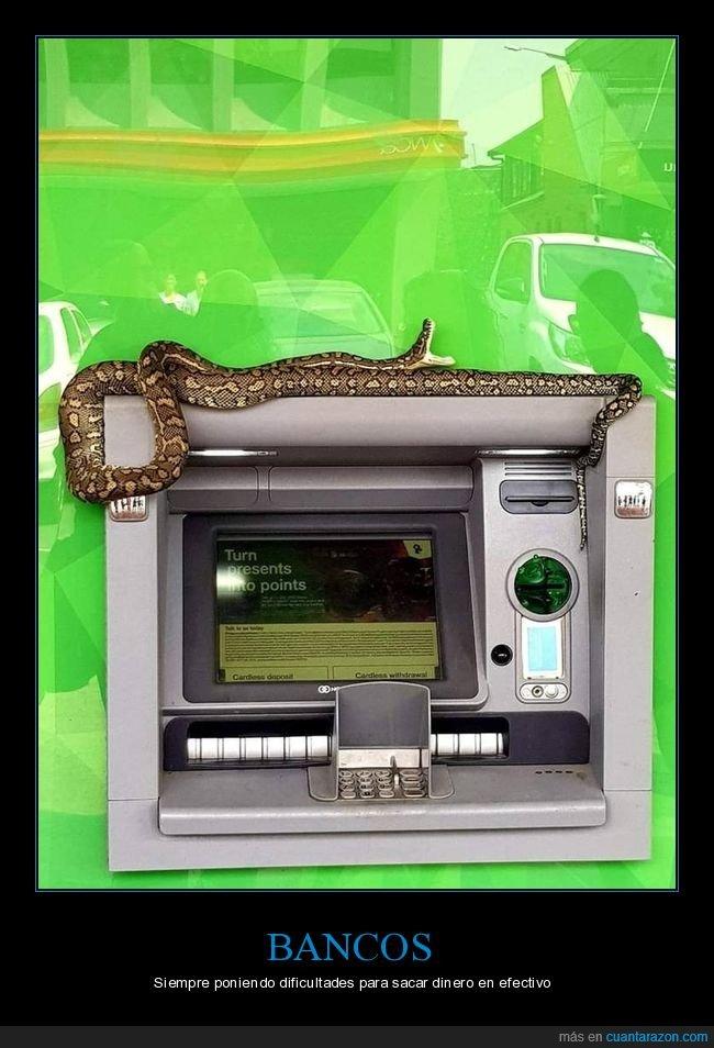 cajero,serpiente,wtf