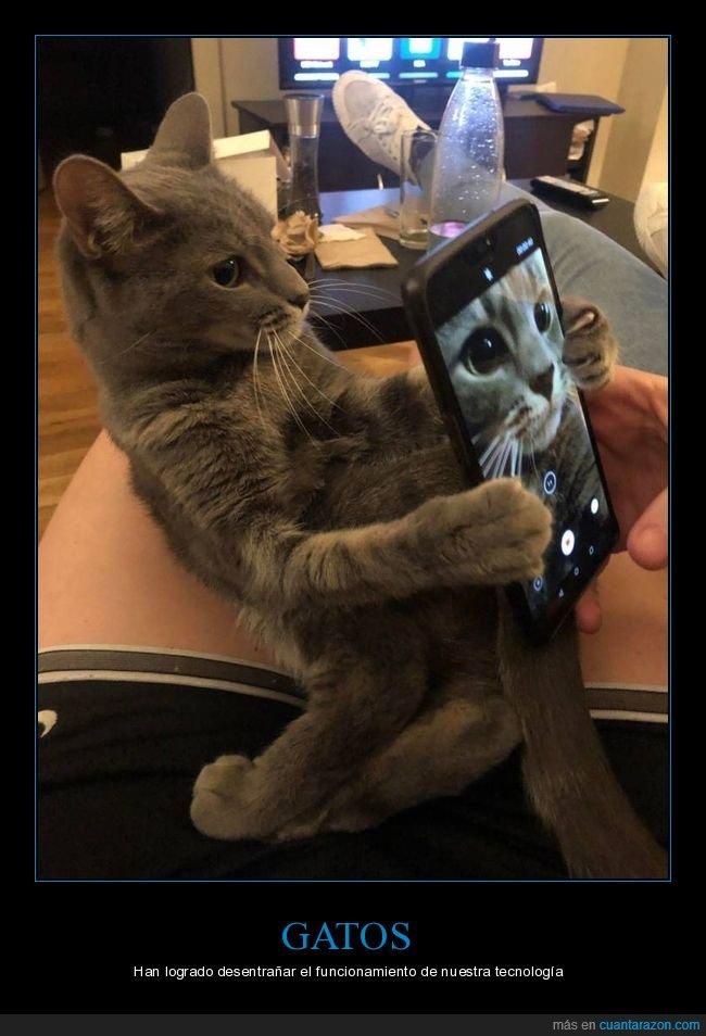 foto,gatos,móvil