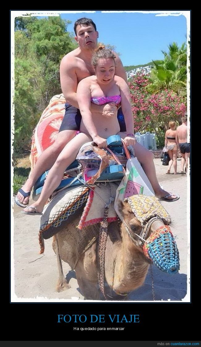 camello,careto,caretos,wtf