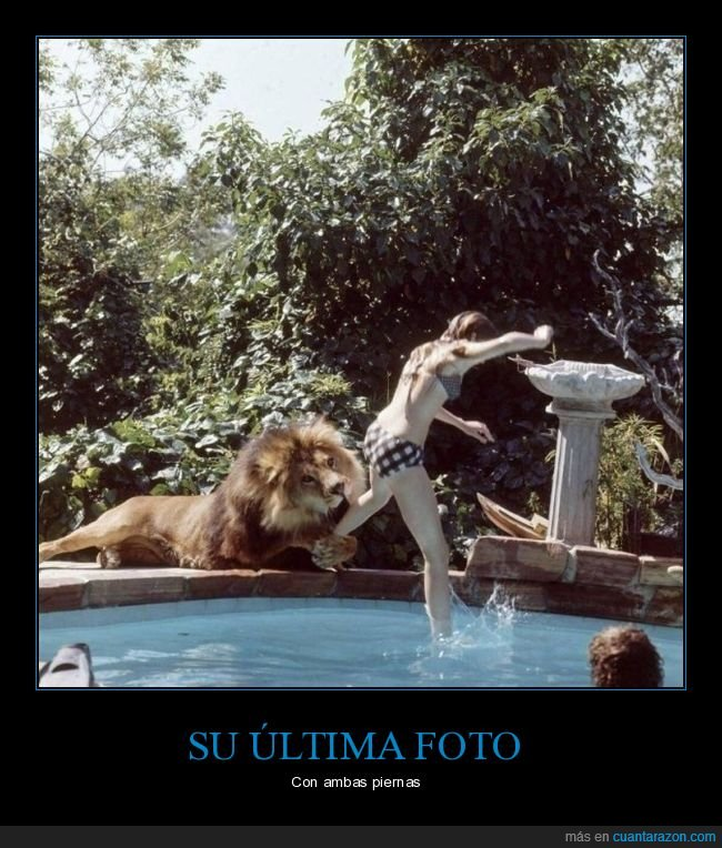 león,mordisco,piscina,wtf