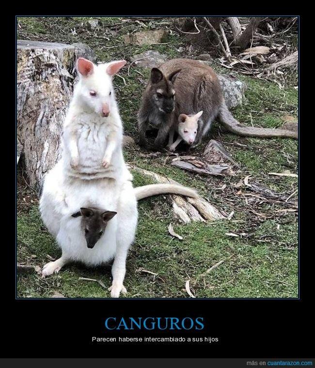albinos,canguros,hijos
