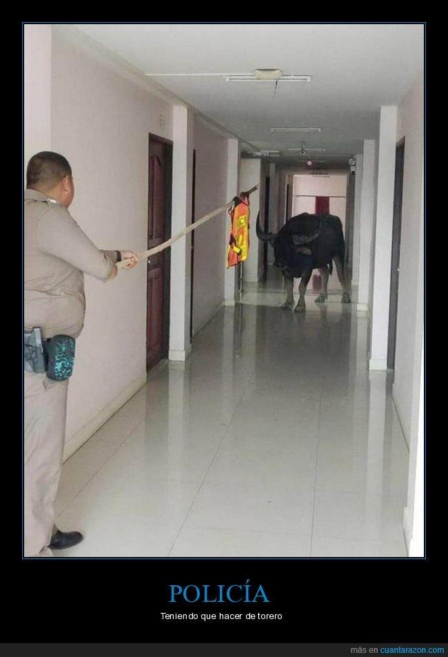 policía,toro,wtf