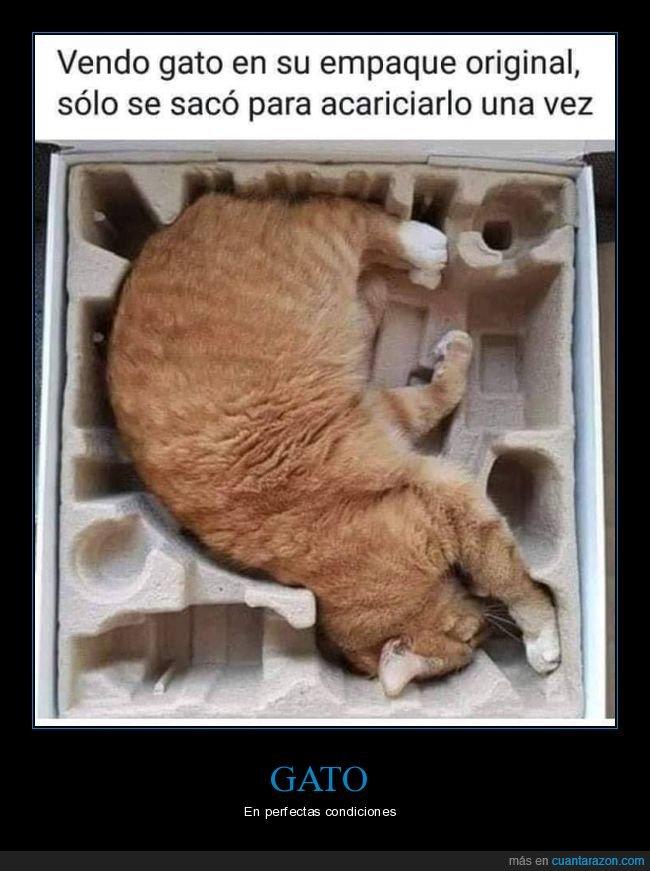 caja,gatos,original
