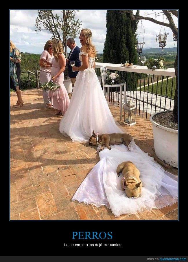 boda,durmiendo,novia,perros,vestido