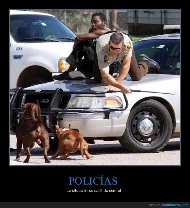 coche,perros,policía