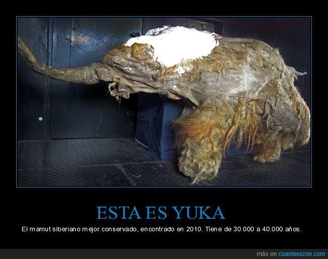 conservado,mamut,yuke