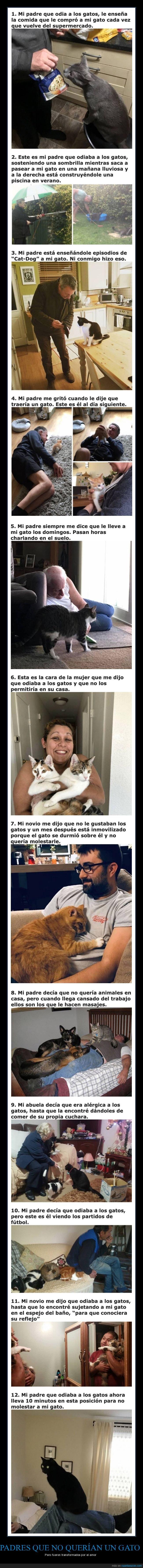 gatos,padres,querer