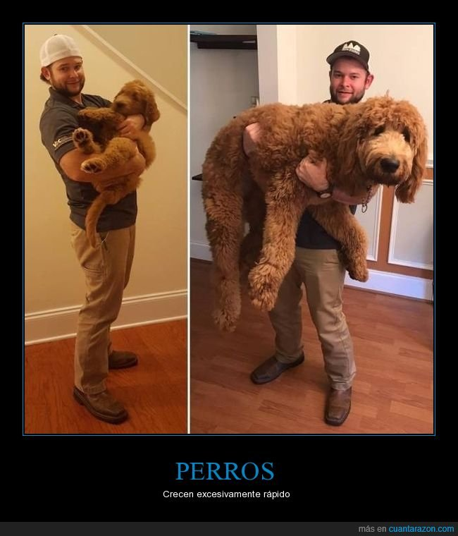 ahora,antes,crecer,perro