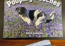 Enlace a Ya está aquí el calendario de perros cagando 2020