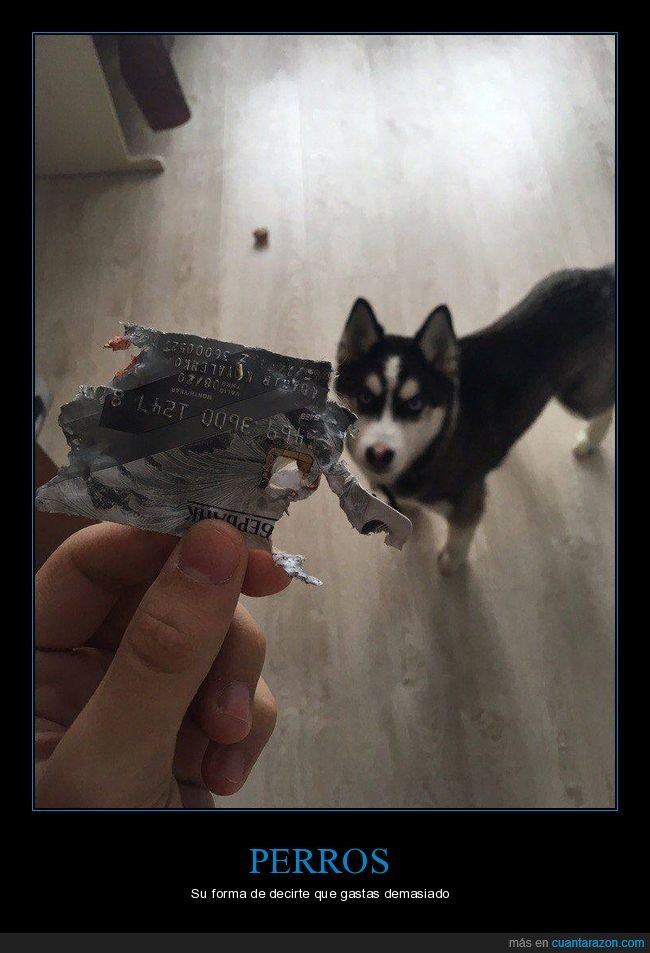fails,perros,tarjeta de crédito