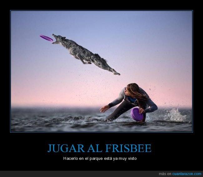 frisbee,perro,surf