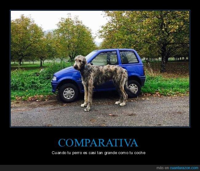 coche,comparativa,perro,tamaño