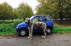 Enlace a Un perro como un coche