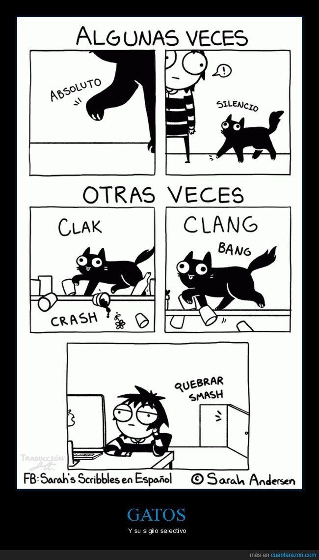 gatos,ruido,silencio