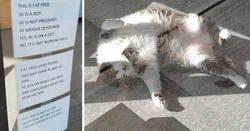 Enlace a Este es Fat Fred, un gato que se ha vuelto viral tras publicarse su divertido cartel en una clínica veterinaria