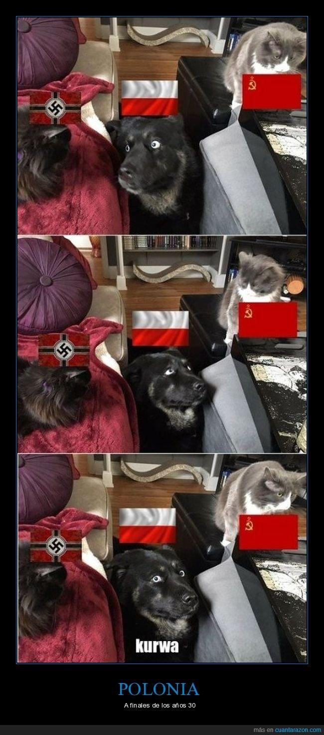 alemania,gato,gatos,nazi,perro,polonia,unión soviética
