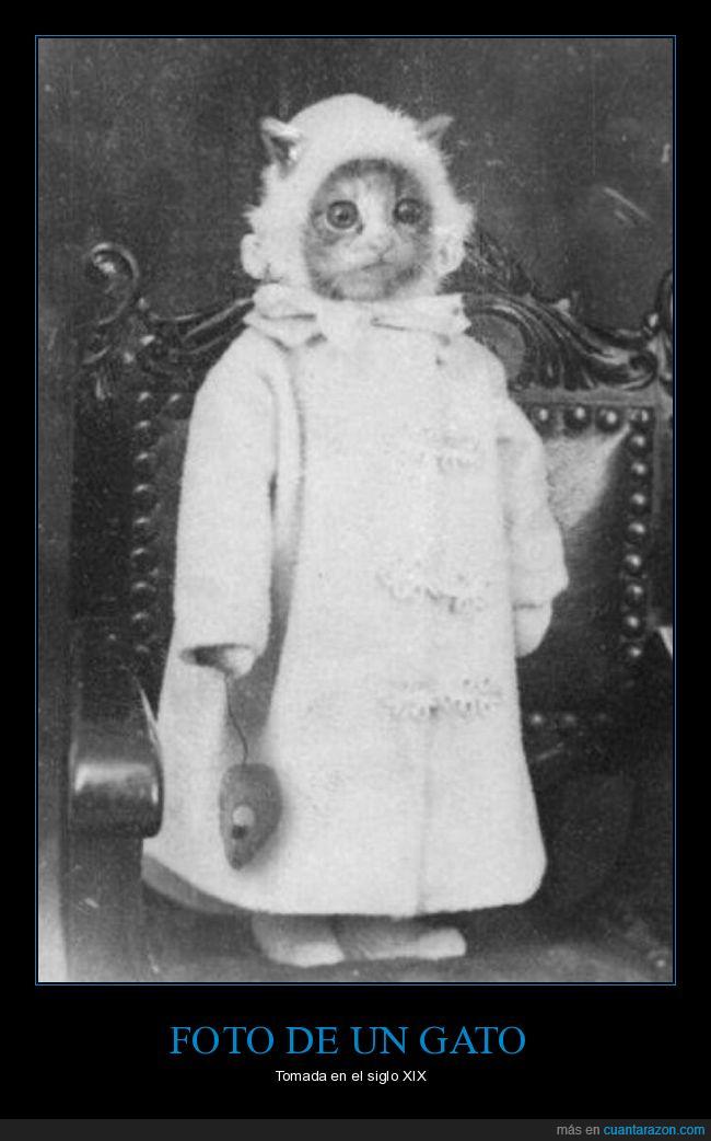 foto,gato,retro,siglo xix