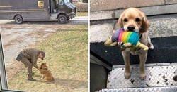 Enlace a Resulta que los conductores de UPS tienen un grupo de Facebook con los perros que se encuentran en ruta