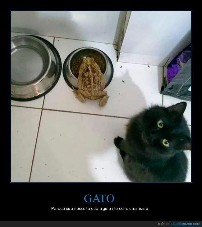 comida,gato,sapo