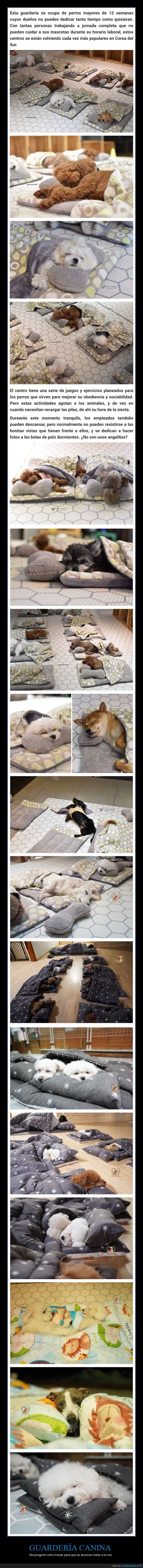 cachorros,durmiendo,guardería canina,perros