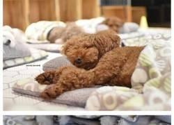 Enlace a Estas fotos de perritos durmiendo en una guardería canina están conquistando internet