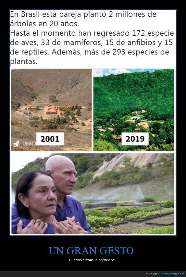 árboles,brasil,pareja,plantar