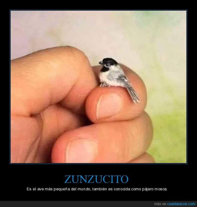 pájaro,pequeño,zunzucito
