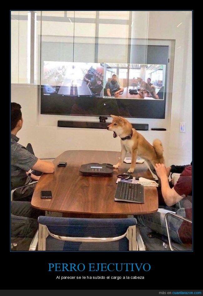 perro,sala de juntas,wtf