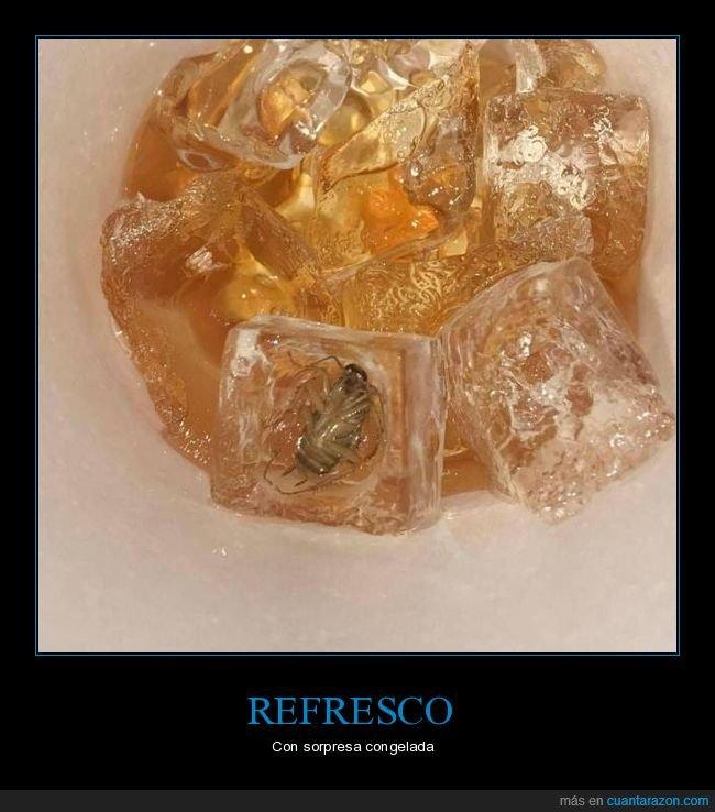 cucaacha,hielo,refresco