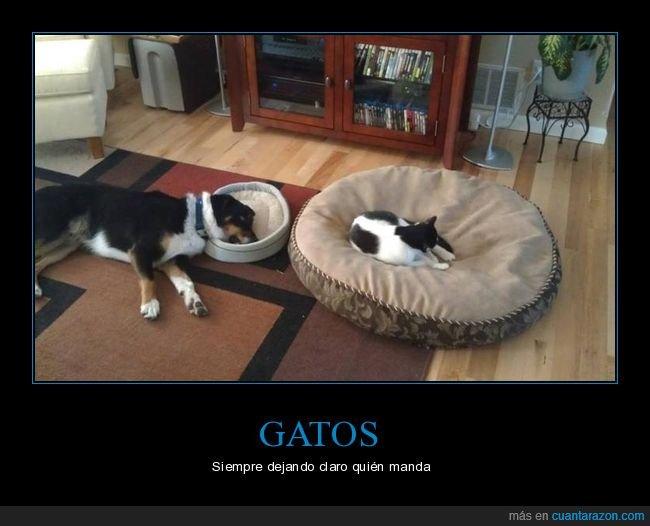 camas,gato,perro