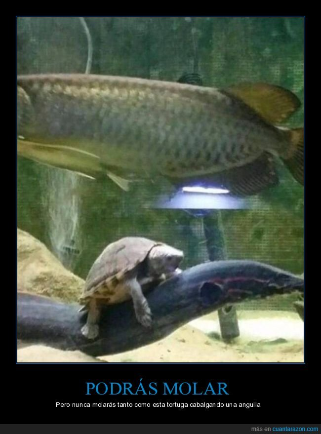 anguila,molar,tortuga