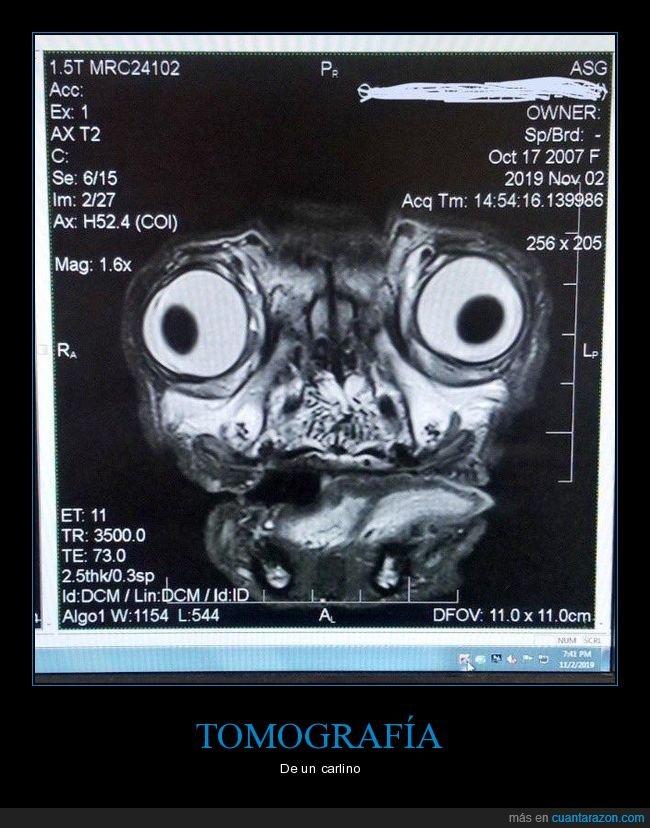 carlino,perro,tomografía