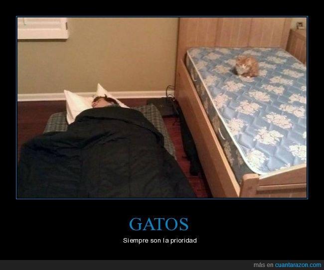 cama,colchón,durmiendo,gato