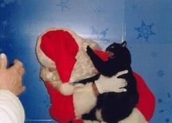Enlace a Odia la Navidad
