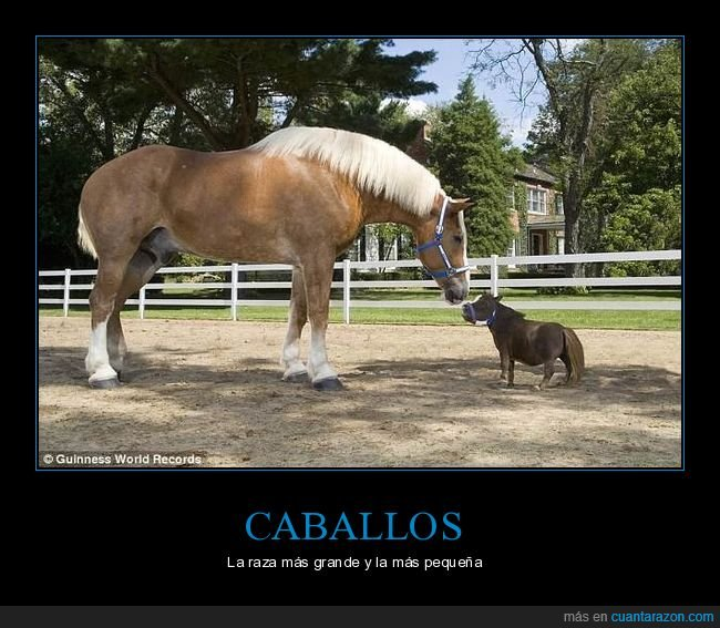caballos,grande,pequeño,raza