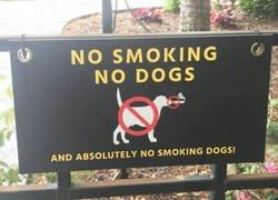 Enlace a Ni fumar, ni perros, ni perros fumando