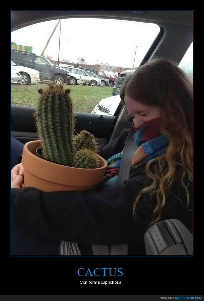 cactus,that's a penis
