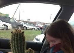 Enlace a Su cactus favorito