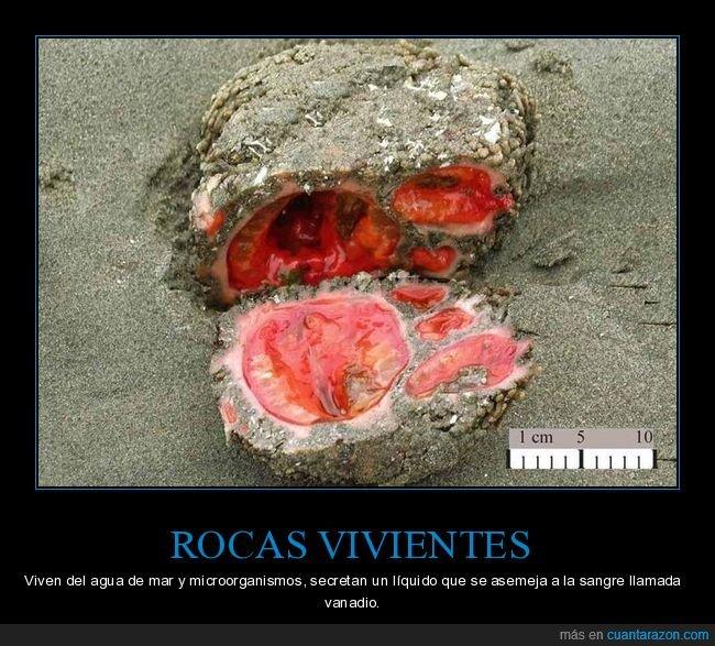 curiosidades,rocas vivientes
