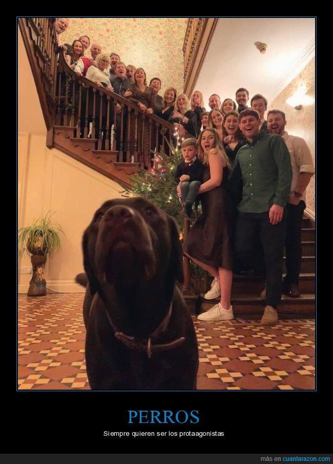 familia,foto,perro
