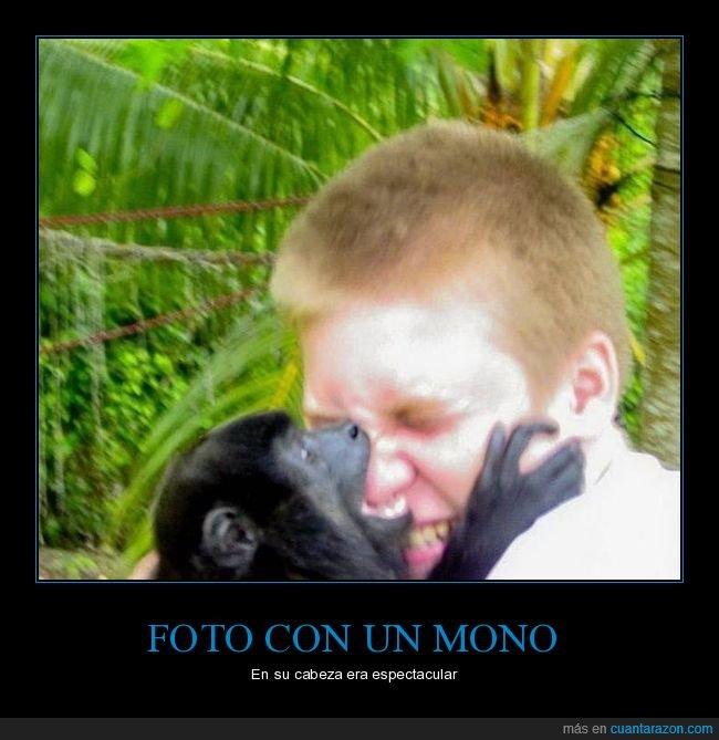 fails,foto,mono,mordiendo,nariz