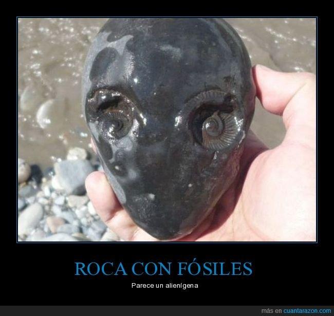 alienígena,fósiles,roca