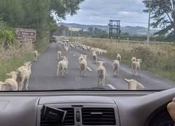 Enlace a ¿Quién dijo que en las zonas rurales no hay atascos?