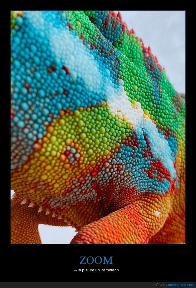 camaleón,piel,zoom