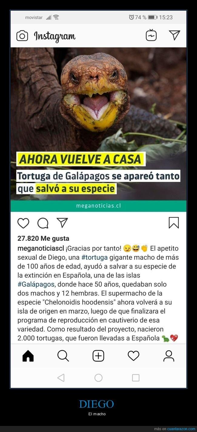 especie,galápagos,reproducción,salva,tortuga