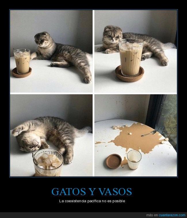 fails,gato,vaso